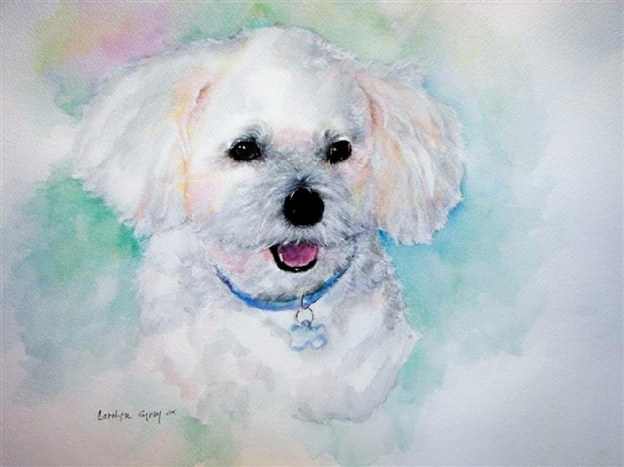 Bichon Frise Watercolor Painting