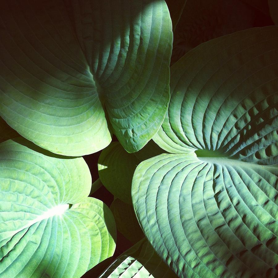Plant Photograph - Big Ears by Stephanie Aarons