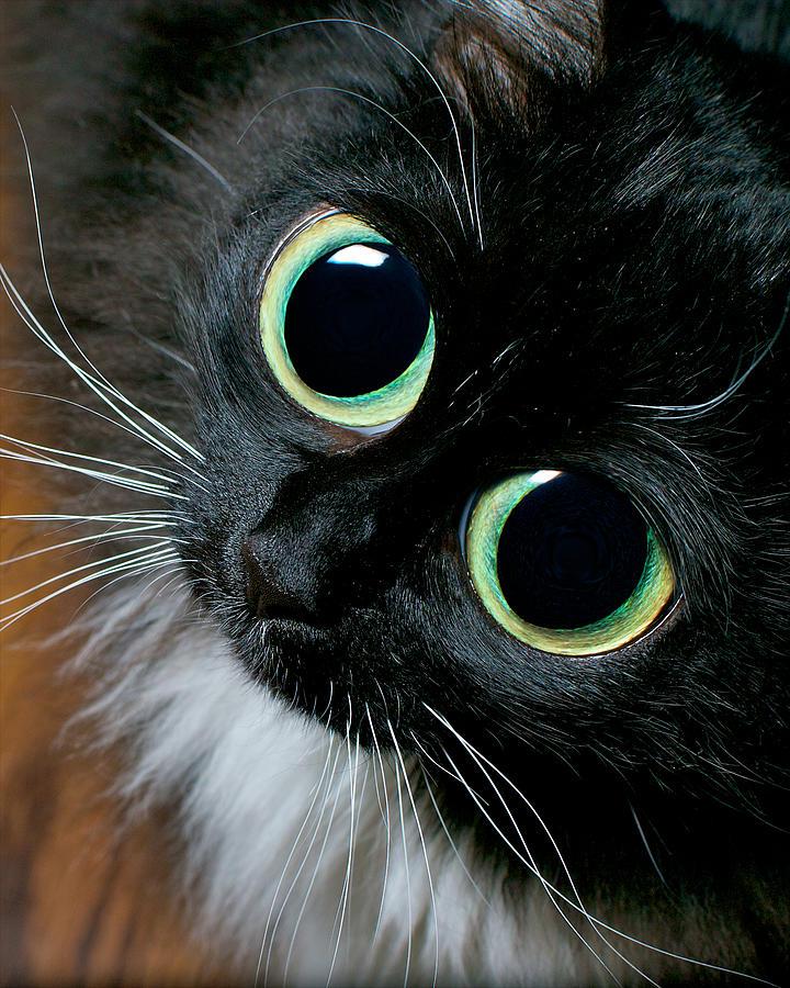 между картинки котика с большими глазами бийск подвинули