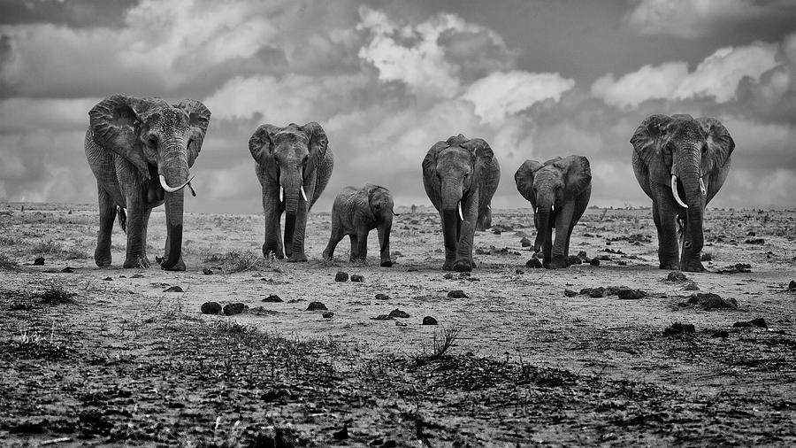 Elephants Photograph - Big Family by Marcel Rebro