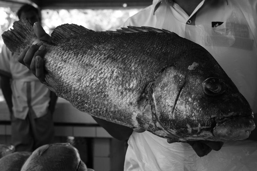 Black And White Photographs Photograph - Big Fish by Maeve O Connell