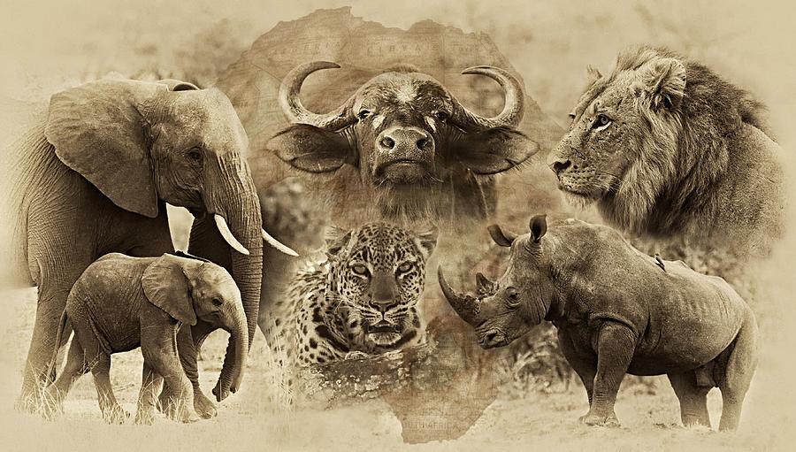 Africa Photograph - Big Five - Untamed Africa by Basie Van Zyl