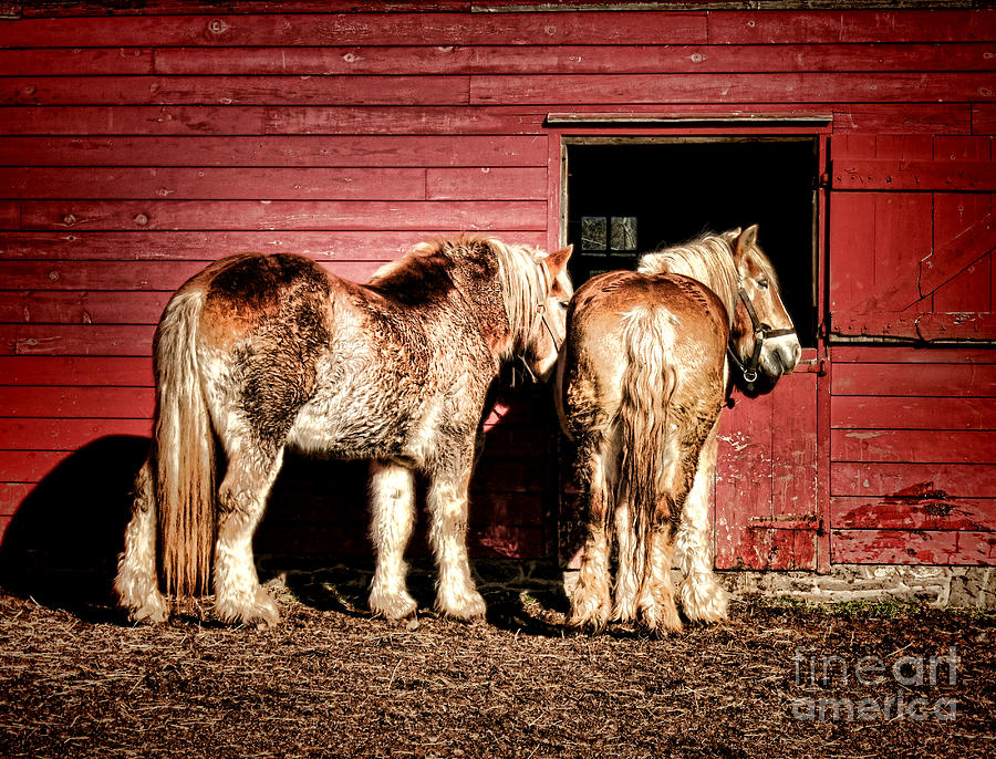 Draft Photograph - Big Horses by Olivier Le Queinec