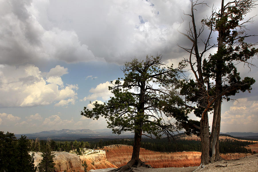Bryce Canyon Photograph - Big Sky Over Bryce Canyon by Joseph G Holland