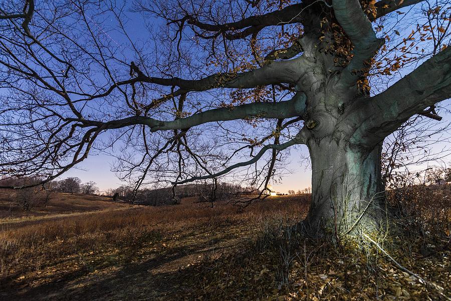 Pennsylvania Photograph - Big Wood by Kristopher Schoenleber