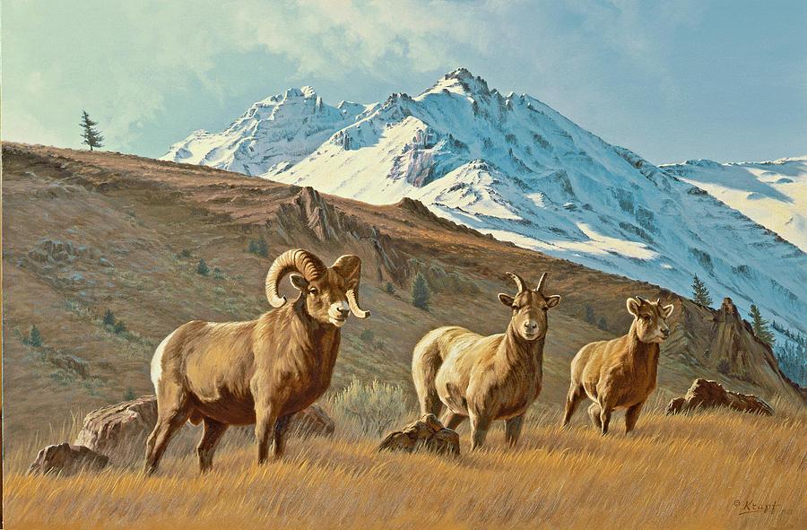 Wildlife Painting - Bighorn Below Electric Peak by Paul Krapf