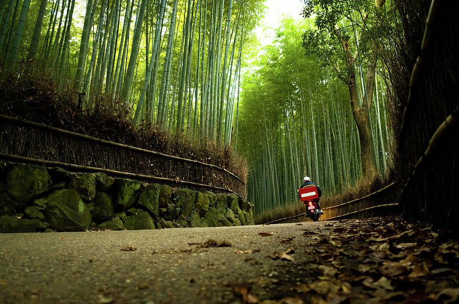 Bike Running Through Bamboo Grove Photograph by Marser