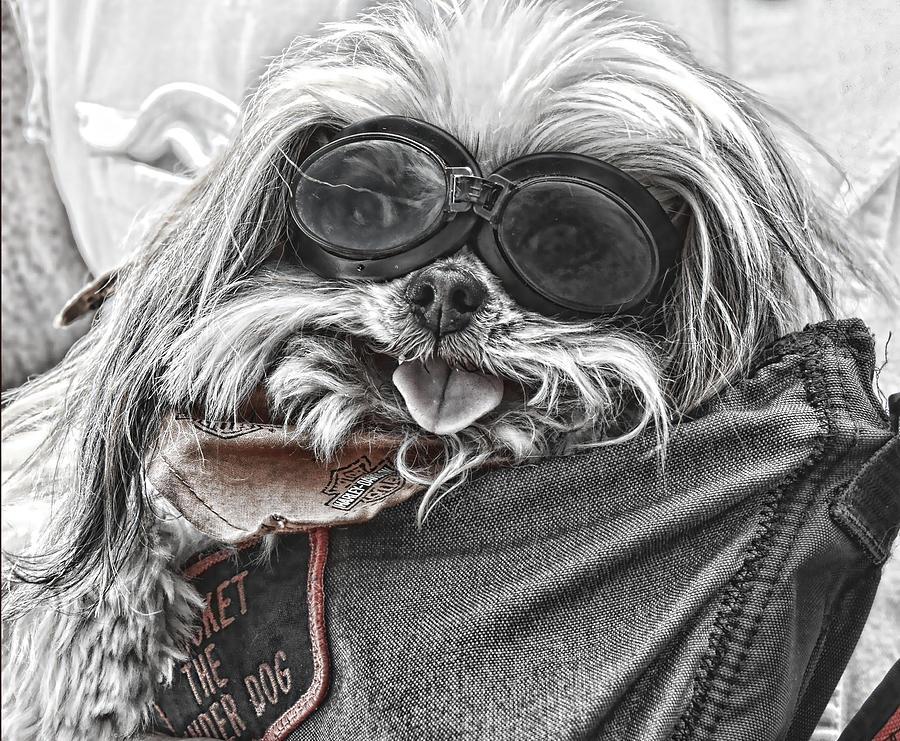 Dogs Photograph - Bikers Best Friend by Joe Bledsoe