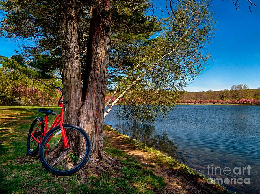 Transportation Photograph - Biking To Horseshoe Lake by Mark Miller