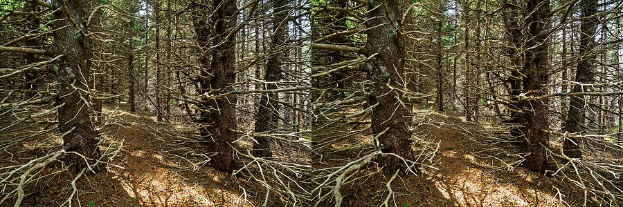 Matt Molloy Photograph - Billions Of Branches by Matt Molloy