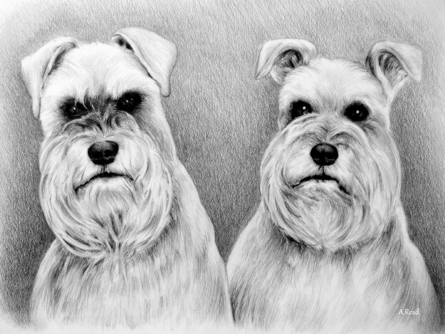 Dogs Drawing - Billy And Misty by Andrew Read