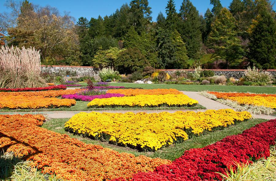 Fall Photograph - Biltmore Gardens  by Lynn Bauer