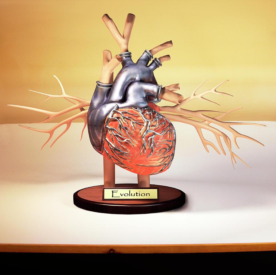 Искусственное сердце в картинках