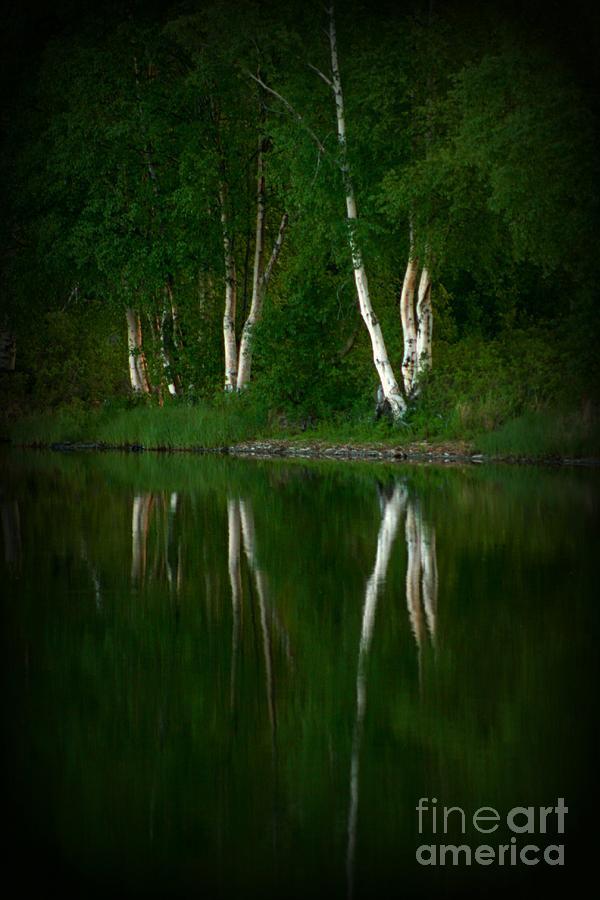 Birch Photograph - Birch Reflection by Rick  Monyahan