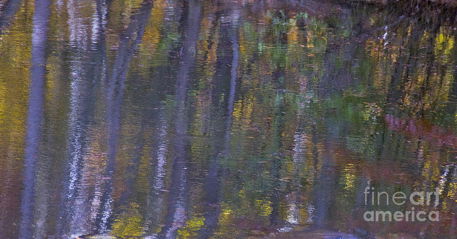 Abstract Photograph - Birch Reflections by Cindy Lee Longhini