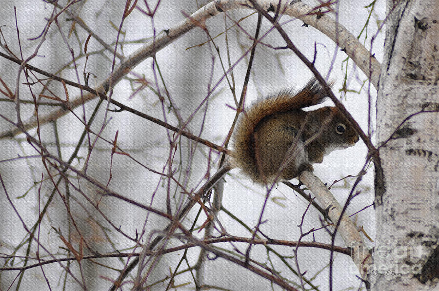 Diane Berry Painting - Birch Squirrel by Diane E Berry