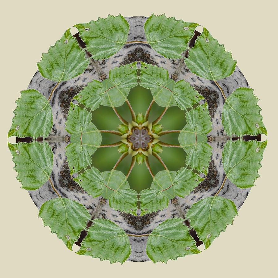 Birch Tree Photograph - Birch Tree Mandala by Beth Sawickie