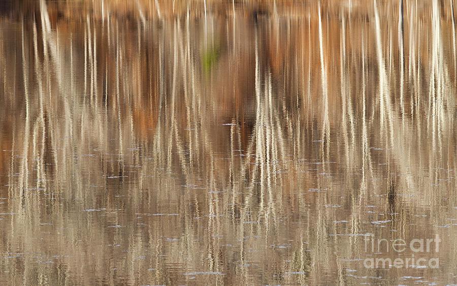 Pond Photograph - Birch Tree Reflections by Alan L Graham