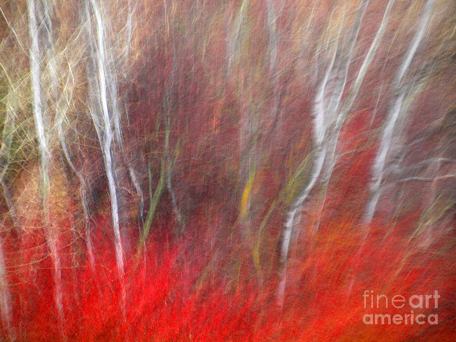 Blur Photograph - Birch Trees Abstract by Tara Turner
