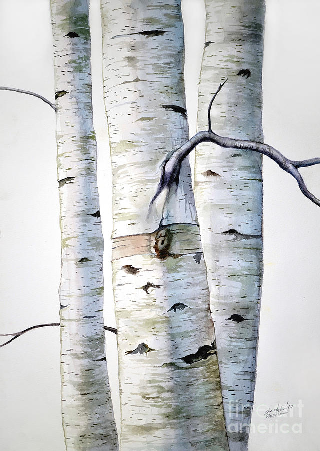 Birch Painting - Birch Trees by Christopher Shellhammer