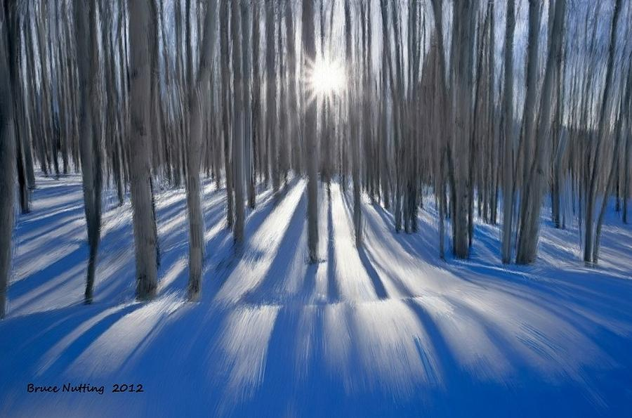 Birches In Winter Painting