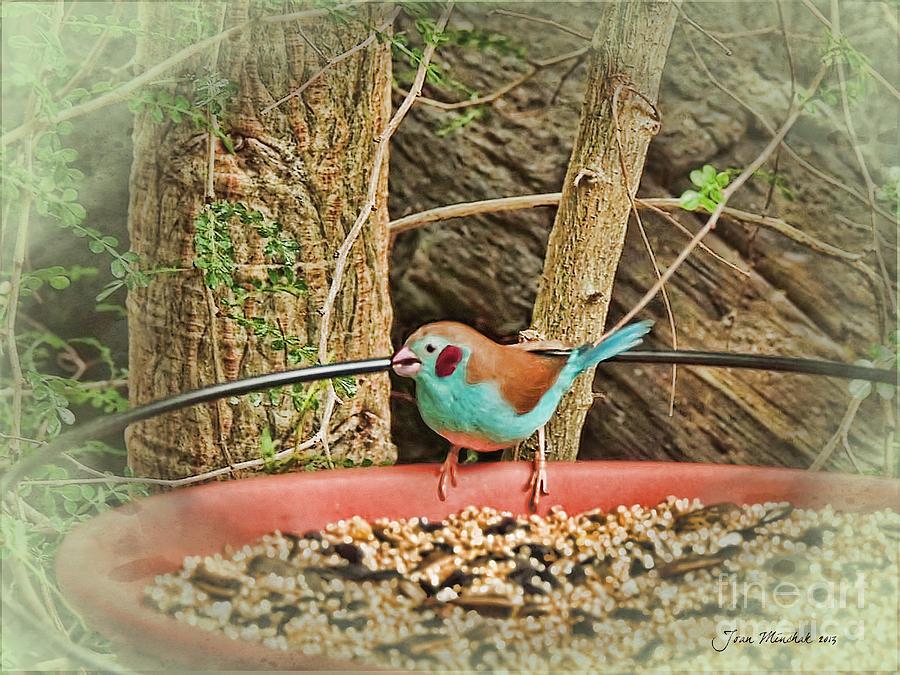 Cleveland Botanical Garden Photograph - Bird And Feeder by Joan  Minchak