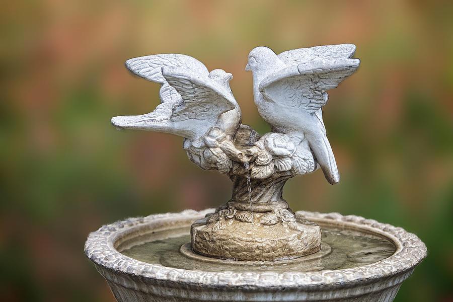 Artistic Photograph - Bird Bath by Linda Phelps