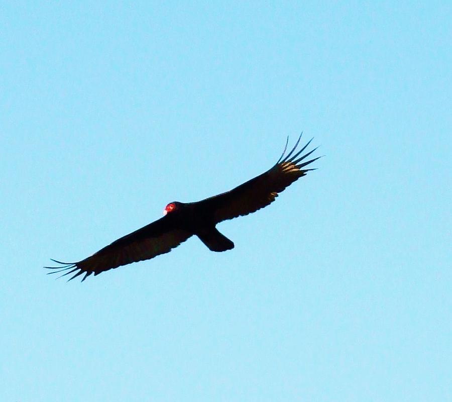 Seminole Photograph - Bird In Flight by Van Ness