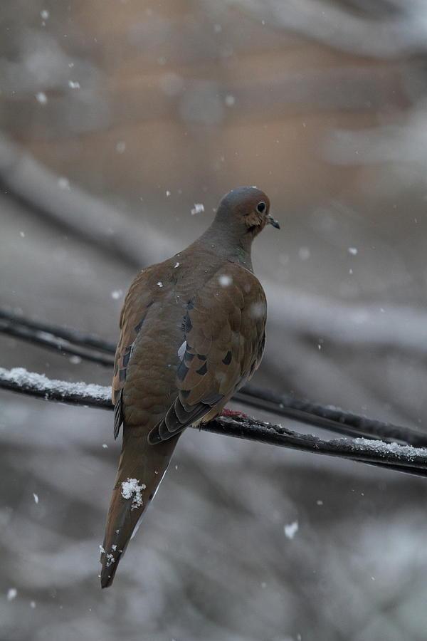 Bird Photograph - Bird In Snow - Animal - 01134 by DC Photographer