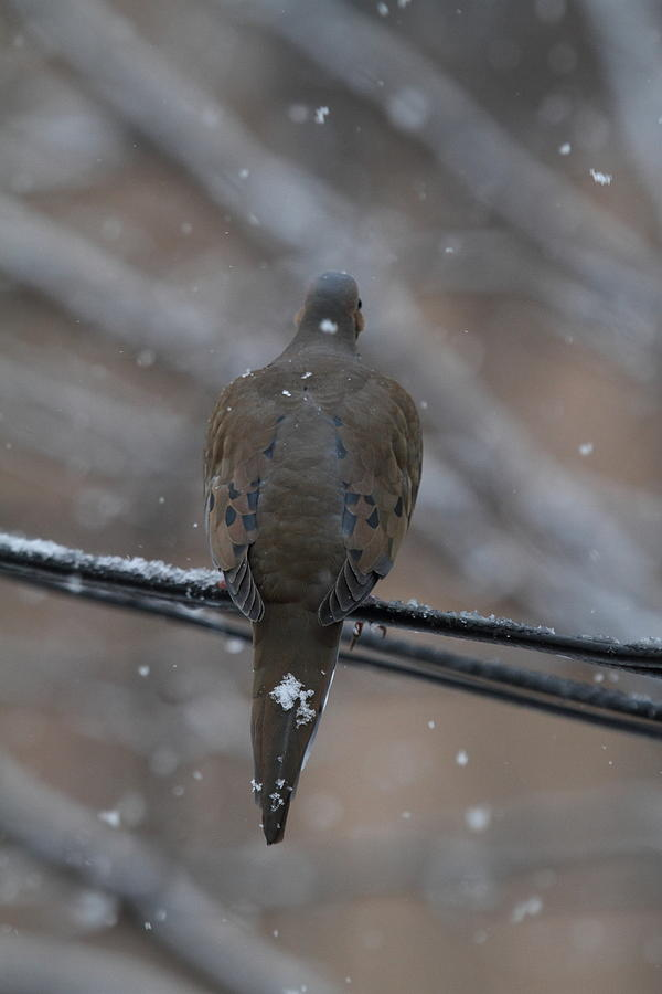 Bird Photograph - Bird In Snow - Animal - 01135 by DC Photographer