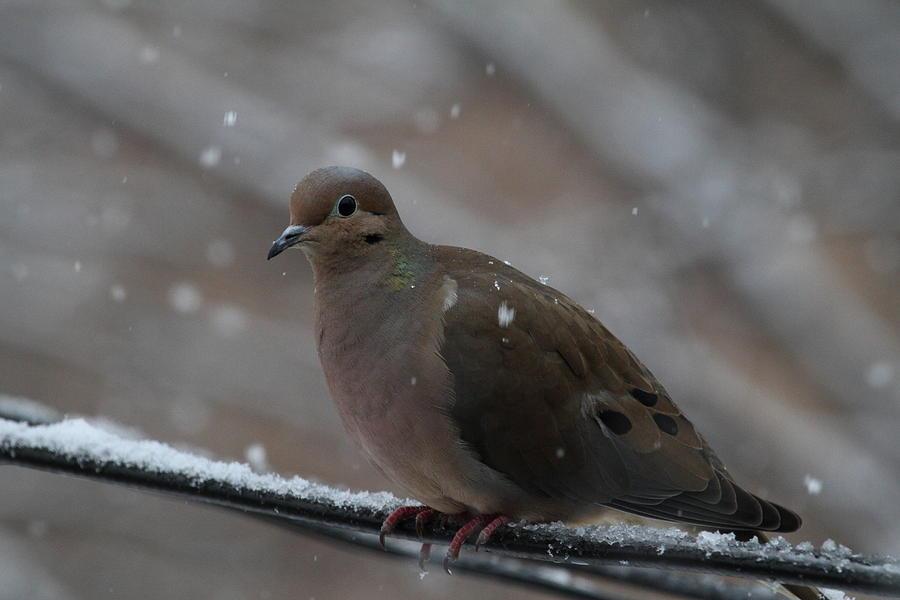 Bird Photograph - Bird In Snow - Animal - 01138 by DC Photographer