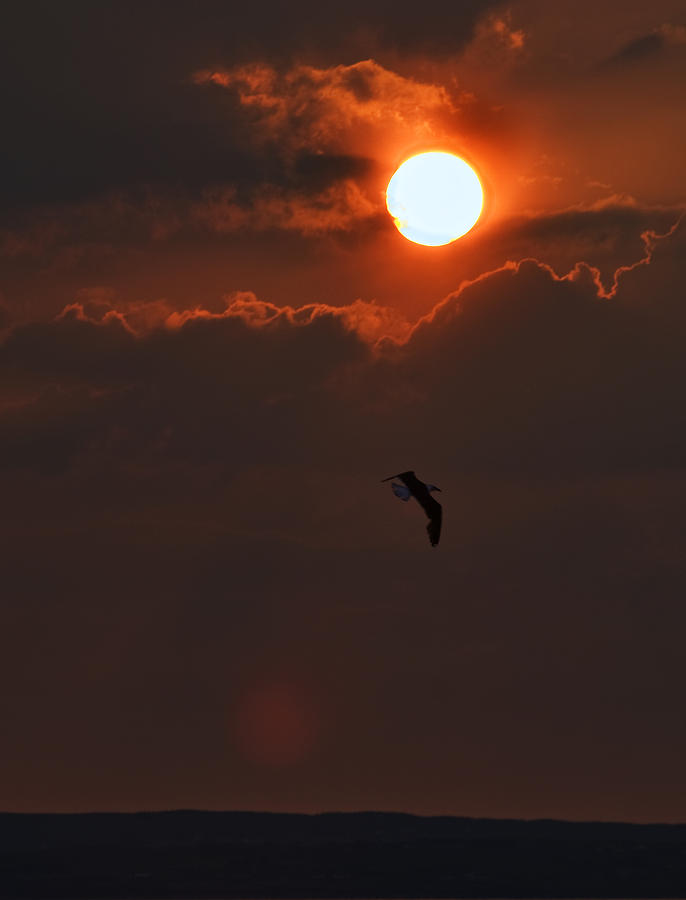 Clouds Photograph - Bird In Sunset by Tony Reddington