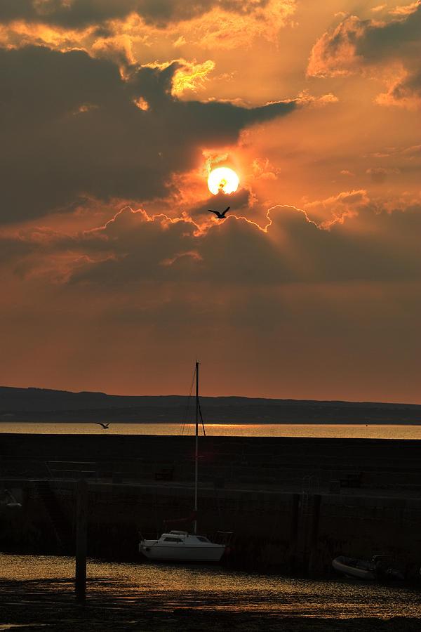 Tony Reddington Photograph - Bird In The Sun by Tony Reddington