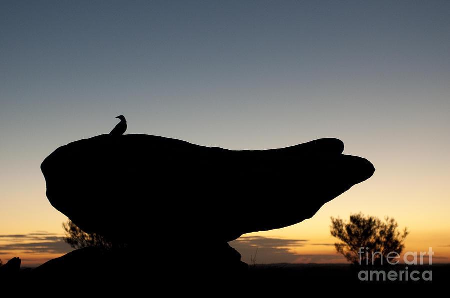 Australia Photograph - Bird by Lana Enderle