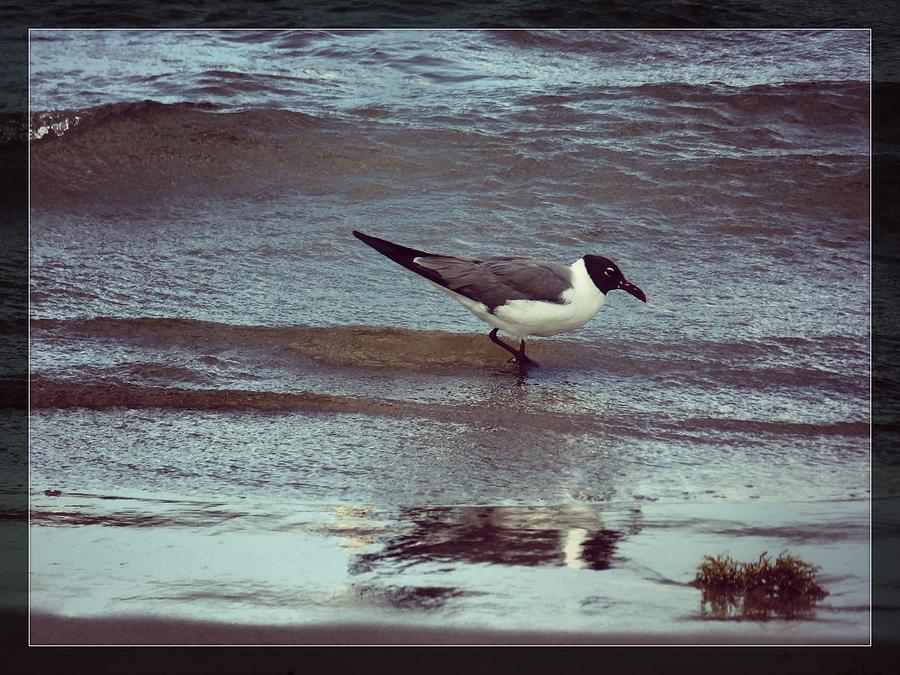 Bird Photograph - Bird landing by Anandi Godse