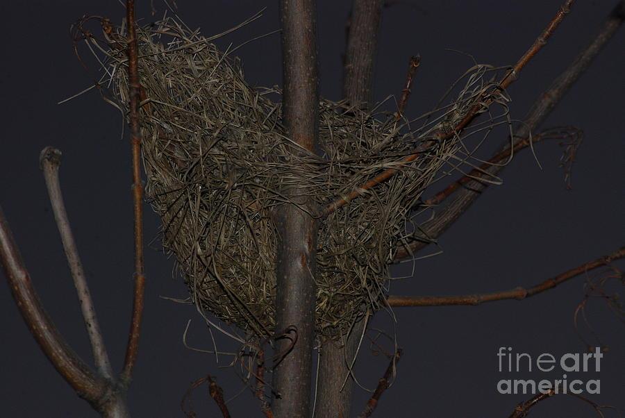Nest Photograph - Bird Nest by Mark McReynolds