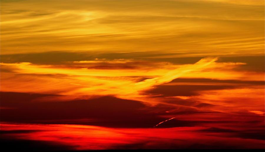 Bird Photograph - Bird Of Fire by Jocelyne Choquette