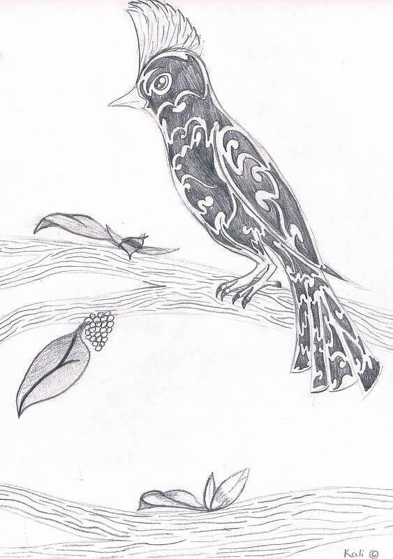 Pencil Drawing - Bird Of Mexico  by Kali Kardsbykali