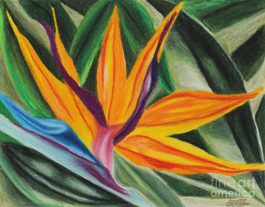 Bird Of Paradise by Annette M Stevenson