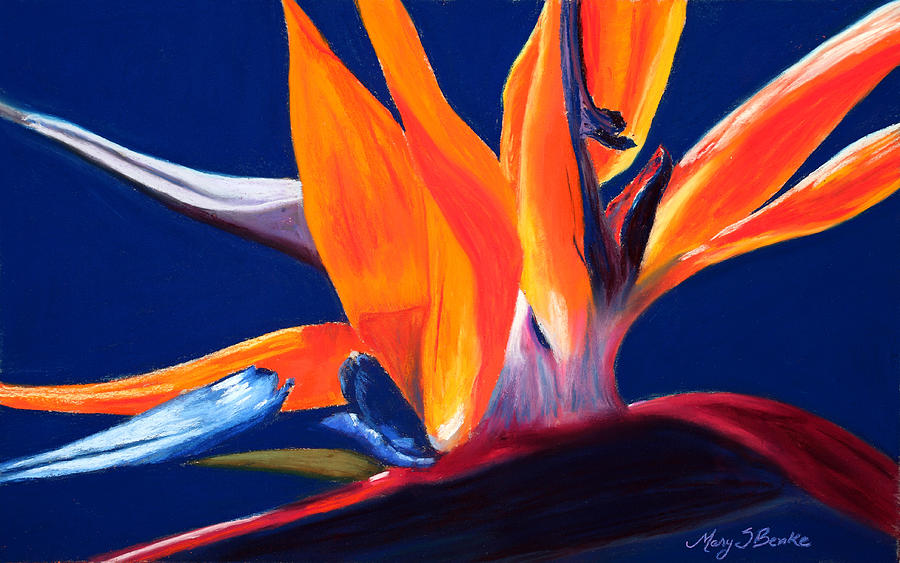 Bird Of Paradise Painting - Bird Of Paradise by Mary Benke