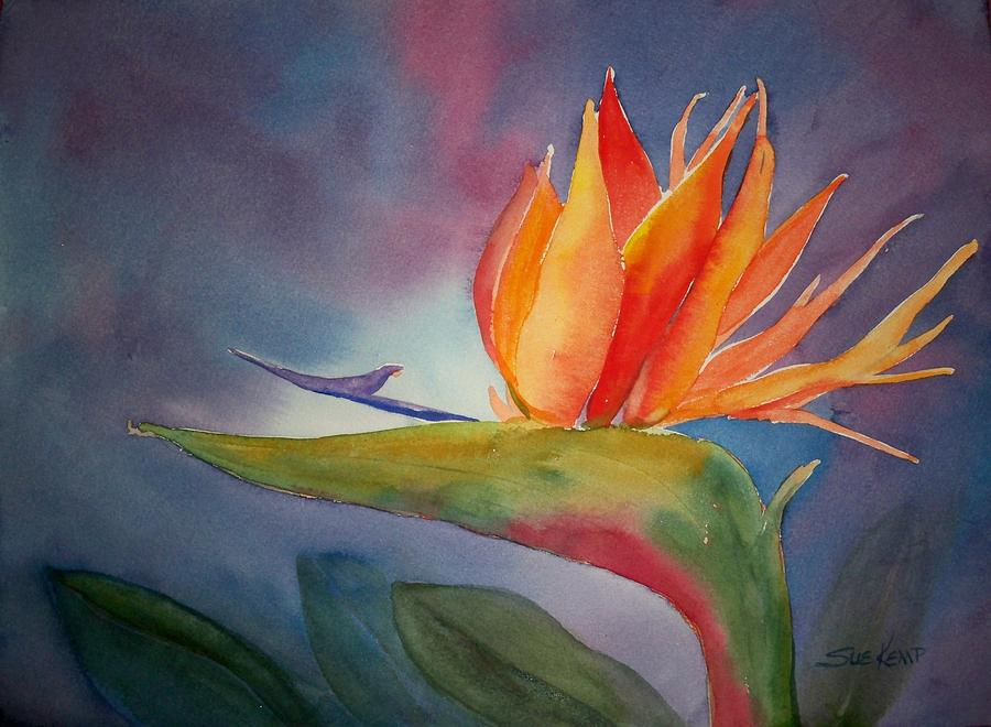 Watercolor Florals Painting - Bird Of Paradise by Sue Kemp