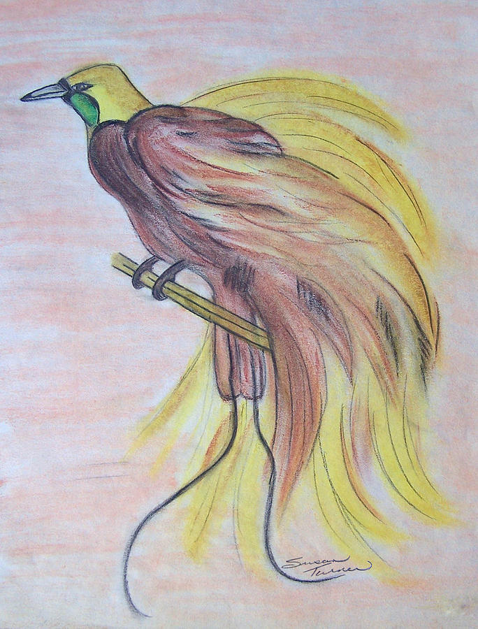 It's just a photo of Dynamic Bird Of Paradise Drawing