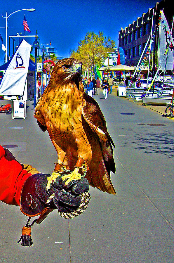 The Story Of Joe And Floyd Digital Art - Bird Of Prey At Boat Show 2013 by Joseph Coulombe