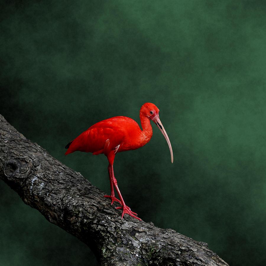 Bird On A Catwalk Photograph by © Debi Dalio