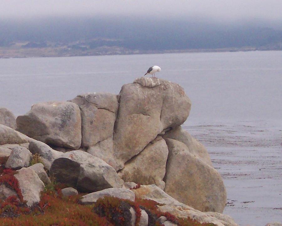 Bird Photograph - Bird On A Rock by Pharris Art