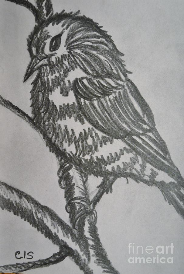 Bird Drawing - Bird On Branch by Cecilia Stevens