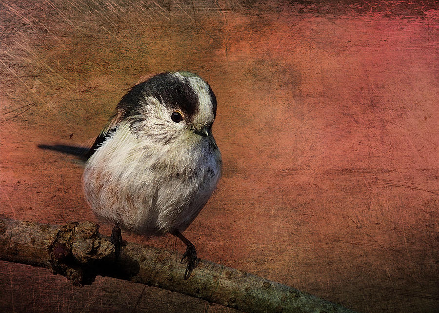 Bird Digital Art - Bird On The Beam by Sarah Vernon