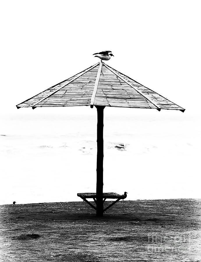 Bird Photograph - Bird On Umbrella by Bruce Bain