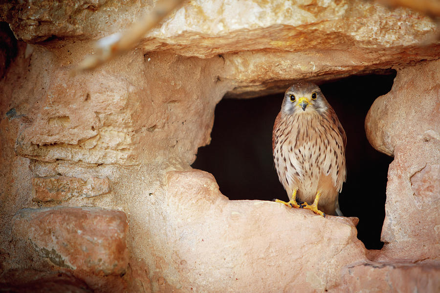 Bird Perched In The Opening Of A Cave Photograph by Reynold Mainse / Design Pics