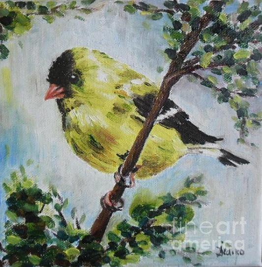 Bird Portrait Original Oil Painting On Canvas Painting By Ildiko Decsei